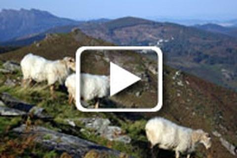 Du devenir des bergers en Pays Basque